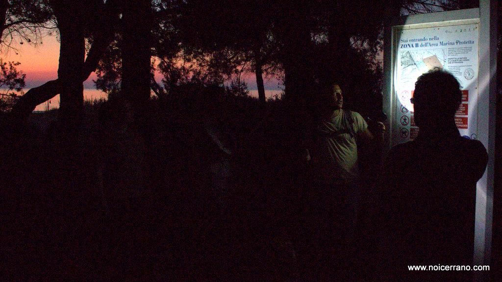 La magia della pineta alle prime luci del giorno.