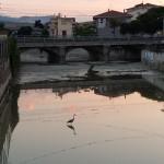 Airone cenerino nell'alveo del torrente Calvano  [Foto F. Verrocchio]