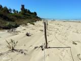 Formazione di dune costiere