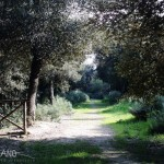 Parco Filiani, via delle spezie