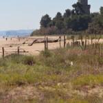 foto2_AMP_pineto_dune