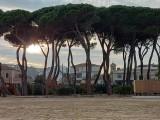 pineta-storica_pineto
